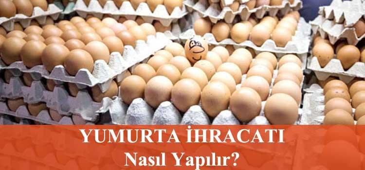 yumurta ihracatı nasıl yapılır